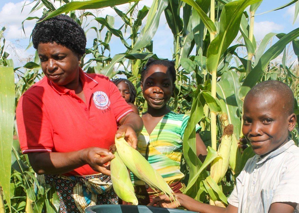 Eine Familie erntet Mais vom Feld.